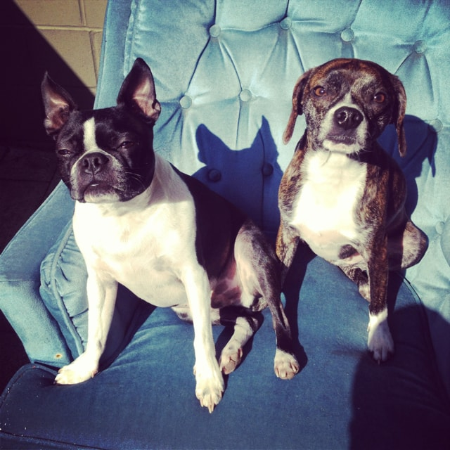 Domino and Benny in their favourite chair, enjoying the sun post walk.