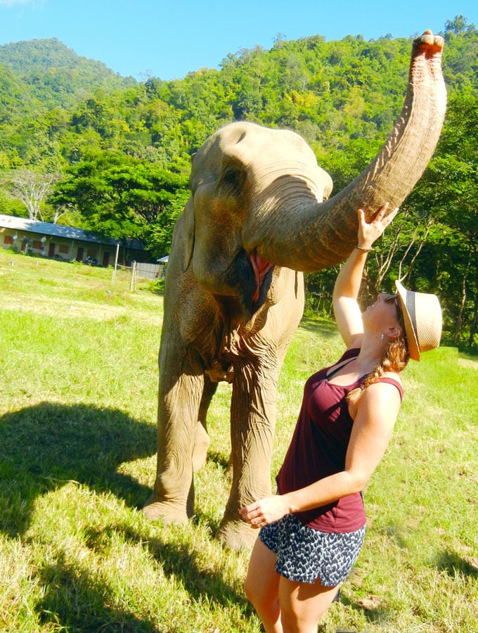 Beautiful Elephant at Elephant Nature Park in Chiang Mai