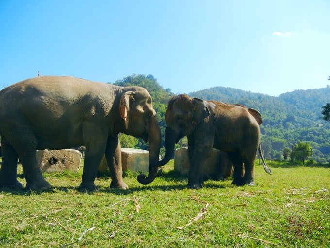 Review of Elephant Nature Park