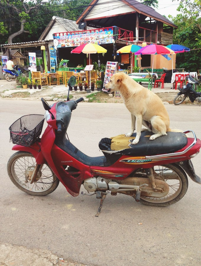 koh-lanta-thailand-scooter